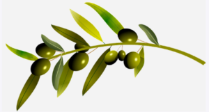 https://bestoliveoilbuy.com/what-are-the-olive-oil-benefits-youll-be-very-surprised/